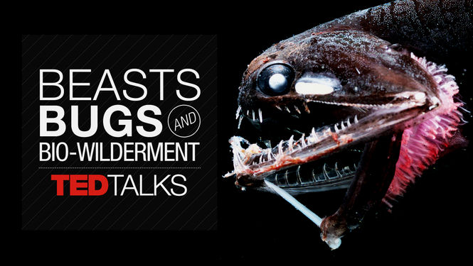 TEDTalks: Beasts, Bugs & Bio-wilderment
